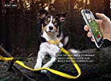 LED-Dog-Safety-Collar-Improved-Dog-Visibility-Safety-Super-Bright-LED-Glow-Flash-Great-Fun-Improved-Dog-Visibility-Safety-Yellow-L
