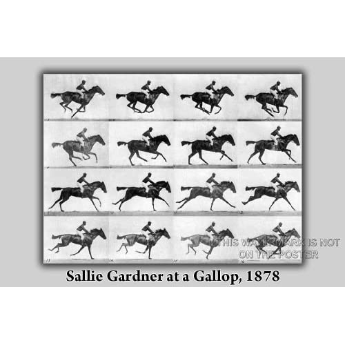 "Amazon.com: Sallie Gardner at a Gallop, 1878 - 24""x36"" Poster: Prints"