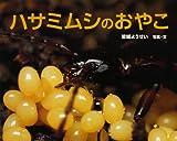 ハサミムシのおやこ (ふしぎいっぱい写真絵本 (11))