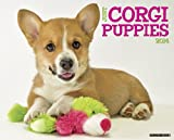 Just Corgi Puppies 2014 Wall Calendar