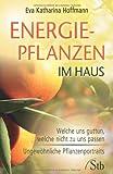 Energiepflanzen im Haus - Welche uns guttun, welche nicht zu uns passen - Ungew�hnliche Pflanzenportraits
