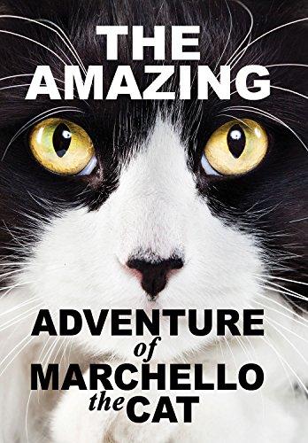 DVD : Amazying Adventure Of Marchello The Cat