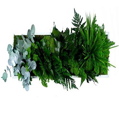 cadre-vegetal-nature-27-x-57cm-composes-de-plantes-naturelles-stabilisees-sans-aucun-entretien-ni-ar