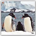 Penguins 2016 Square 12x12 Wall Calendar
