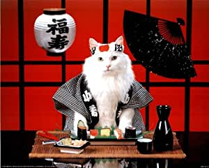 Sushi Cat (Japanese) Photo Print Poster Mini Poster Mini Poster Print, 20x16