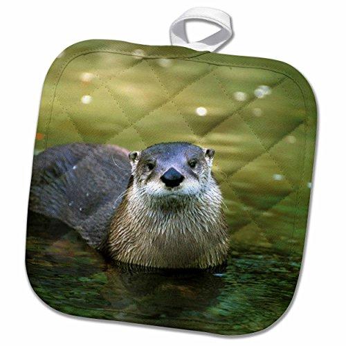 River Otter Potholder