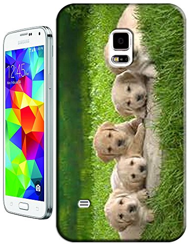 Fives Dogs Looking You On The Green Glass Cell Phone Cases For Samsung Galaxy N3