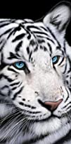 Beach Towel, White Tiger with Blue Ey…