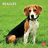 (12x12) Beagles - 2013 Wall Calendar