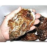 広島生牡蠣