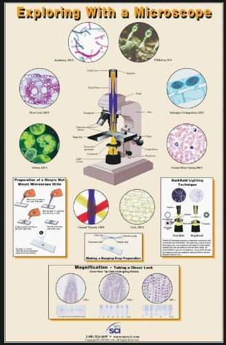"Neo/Sci 35-1006 Exploring With A Microscope Poster, Laminated, 23"" X 35"" Size"