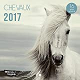 Nouvelles Images Calendrier 2017 Chevaux 16 mois 14,5 x 14,5 cm...
