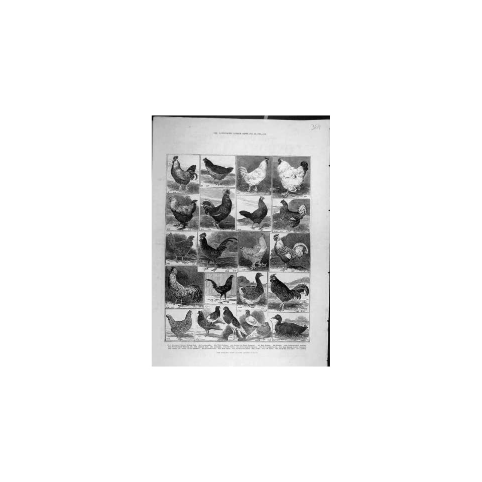 1882 Crystal Palace Poultry Show Chickens Pigeons Birds