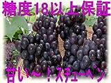 青森県産 スチューベン 5kg(12~20房) ランキングお取り寄せ