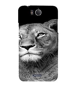 PrintVisa Tiger Animal Design 3D Hard Polycarbonate Designer Back Case Cover for Infocus M530