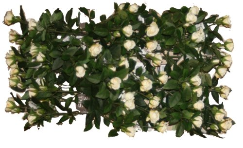 Flower Market Permanent Botanical White Carla Mini-Rose 24 Sprays