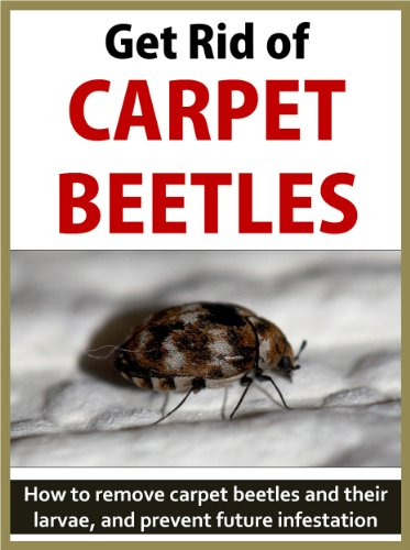 Top Best 5 Carpet Beetle For Sale 2016 Product Boomsbeat