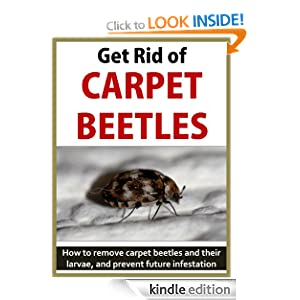 Get Rid of Carpet Beetles: How to remove carpet beetles ...