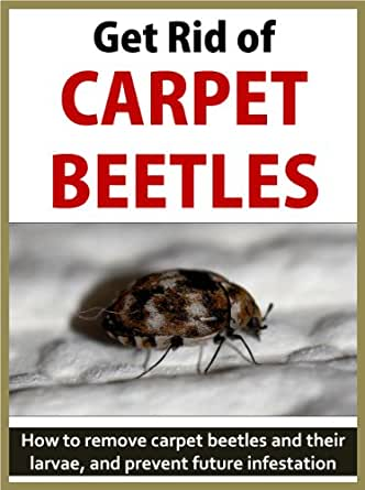 Get Rid Of Carpet Beetles How To Remove Carpet Beetles
