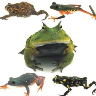 ザ・カエル―世界のカエルの飼育がわかる本 (アクアリウム・シリーズ)
