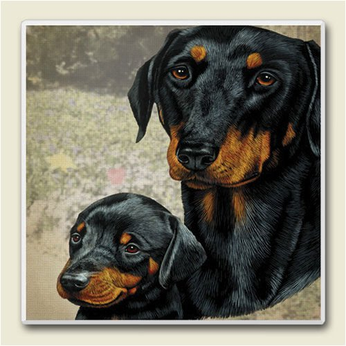 AbsorbaStone Coaster set~ Doberman ~4 Tile Drink Coasters ~ code 825C