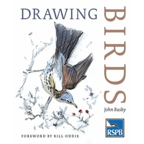 pictures of birds to draw