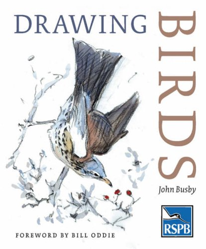 Drawing Birds (RSPB)