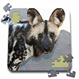 Angelique Cajams Safari Animals - South African Wild Dog head shot - 10x10 Inch Puzzle (pzl_26815_2)