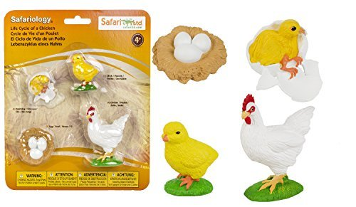 Safari Ltd Safariology the Life Cycle of a Chicken