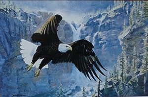 Amazon Com Eagle Quot Free Flight Quot By Artist Jack Dumas
