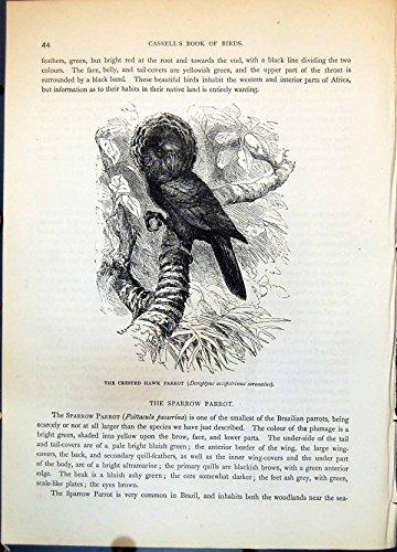 Stampi il Pappagallo Crestato Deroptyus Accipitrinus Coronatus C1874 210G363 del Falco