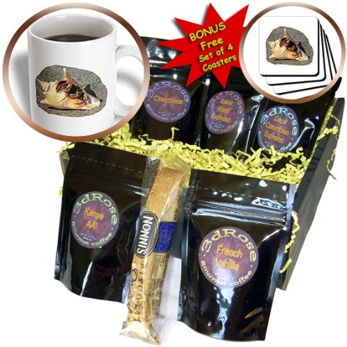 cgb_156258_1 Susans Zoo Crew Animals - Hermit Crab on Sand Coming out of shell - Coffee Gift Baskets - Coffee Gift Basket