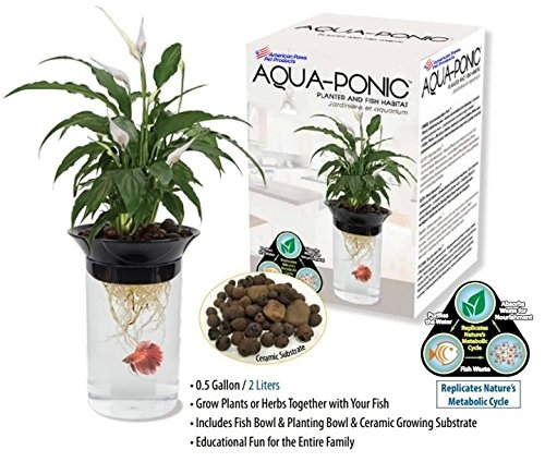 Aquaponics shopswell for Betta fish aquaponics