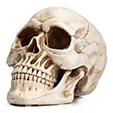 Readaeer® Life Size Replica Realistic Human Skull Gothic Halloween Decoration Ornament Model