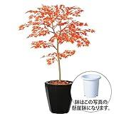 エフプランター 人工観葉植物-ヤマモミジ RED-100-7号鉢-懸崖鉢