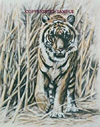 Bengal Tiger - Drawing by Cindy Farmer