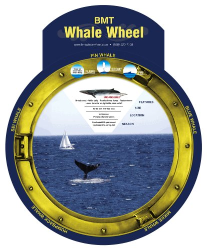 BMT Whale Wheel Wall Chart