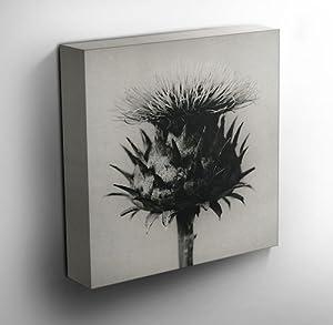 Canvas Wall Art Prints Thistle 30cm X 30cm