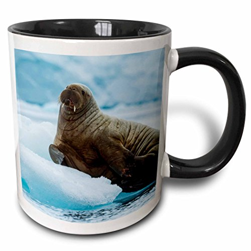 3dRose Danita Delimont - Walrus - Norway. Svalbard. Brasvelbreen. Atlantic walrus resting on ice floe - 11oz Two-Tone Black Mug (mug_227772_4)