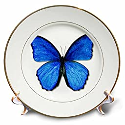 3dRose cp_12648_1 Photo Illustration Blue Butterfly - Porcelain Plate, 8\
