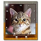 Dc_46669_1 Taiche - Photography - Tabby Cats - Hello Kitty - Animal Moggie Tabbies Tabby Cat Cat Cats Cute - Desk...