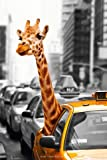 (24x36) New York City - Safari Giraffe Animal Poster