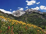 Alpine Meadow Flowers - Premium Quality Mouse Mat 24 x 19cm