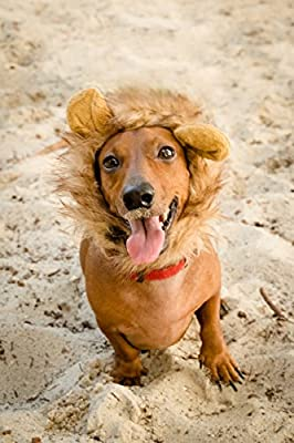 Lion Mane Wig for Cat or Small Dog Costume and Complementary Feathered Catnip Toy Christmas Ready by Pet Krewe