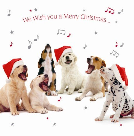 Carol Singers Mix Dogs Luxury Christmas Cards Pack