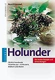 Holunder -