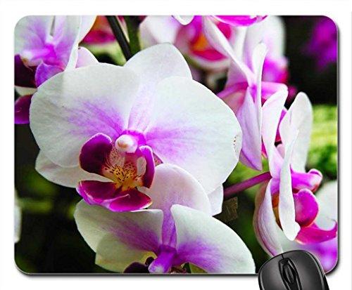 orchidees-tapis-de-souris-tapis-de-souris-tapis-de-souris-fleurs