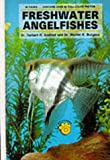 Herbert R. Axelrod Freshwater Angelfish