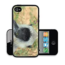 buy Liili Premium Apple Iphone 4 Iphone 4S Aluminum Case Close Up Of A Grey Langur Semnopithecus Schistaceus Eating Yala Sri Lanka Image Id 21823888