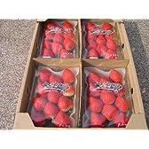 香川県生まれのイチゴ「さぬきひめ」4パック入り